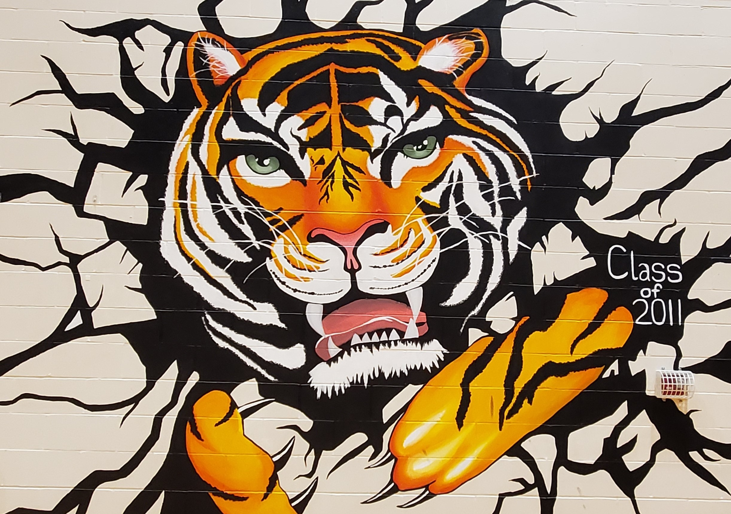 Tiger breaking through gym wall